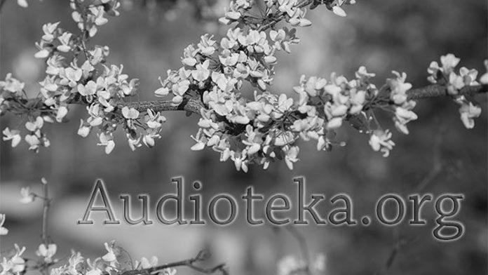 Audioteka.org