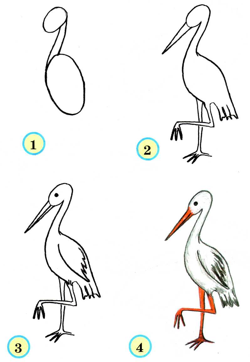 Учимся рисовать птиц - Audioteka.