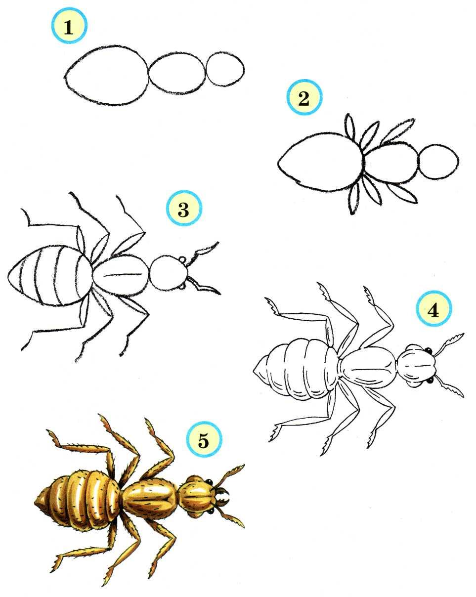 Нарисовать поэтапно насекомых