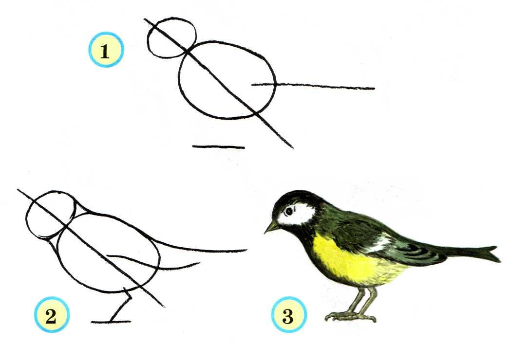 Рисуя птицу, помним, что её