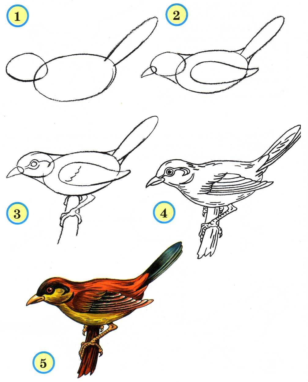 Как нарисовать пошагово птицу