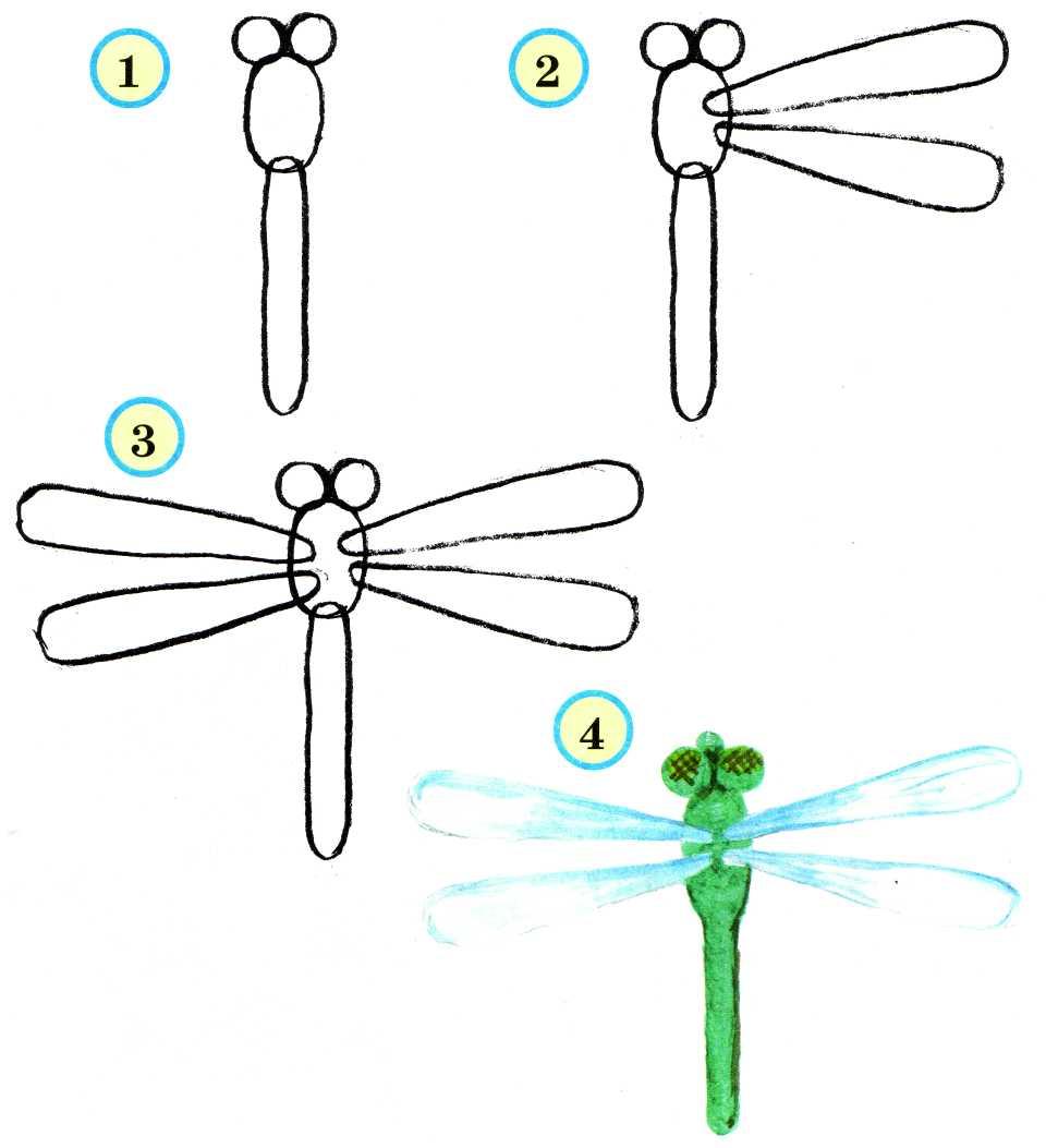 Как стрекозу нарисовать карандашом поэтапно для начинающих