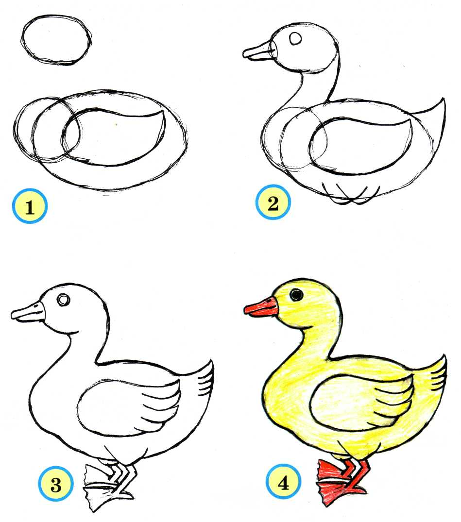 how to draw ducks in a pon